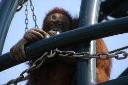 旭山動物園、おらんうーたん館